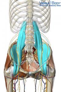 Hip Flexor Low back pain